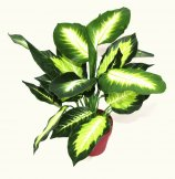 Realistic Artificial Plant 40cm Dieffenbachia Dark